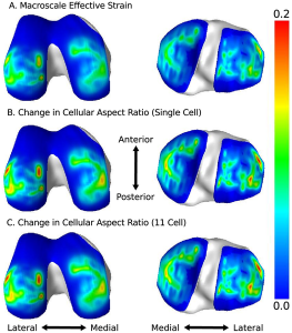 Fringe plots showing macro-scale and micro-scale deformation metric regional distributions in the middle layer of cartilage of the femur (left) and tibia (right).